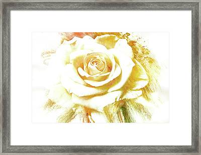 Framed Print featuring the photograph yellow Rose by Athala Carole Bruckner