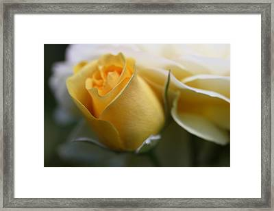Yellow Rose Bud Flower Framed Print by Jennie Marie Schell
