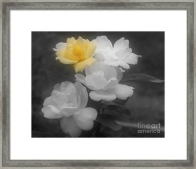 Framed Print featuring the photograph Yellow Rose Cluster Partial Color by Smilin Eyes  Treasures