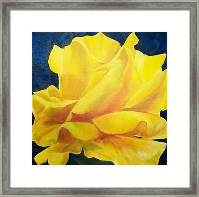 Yellow Rose Framed Print by Dana Redfern