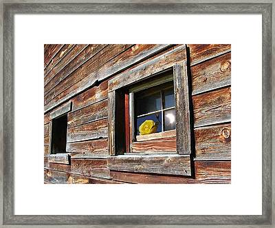Yellow Rose Eclipse Framed Print by Tim Allen