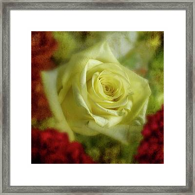 Yellow Rose Framed Print by Garry McMichael
