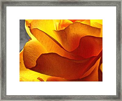 Yellow Rose In The Sun Framed Print by Lori Miller