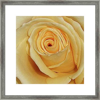 Yellow Rose Framed Print by Merton Allen