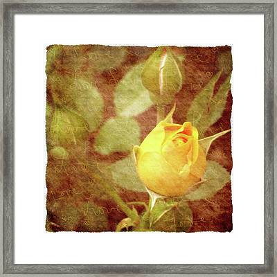 Yellow Rose Of Love Framed Print by Cathie Tyler