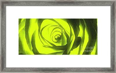 Yellow Rose Of Texas II Framed Print