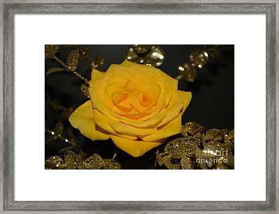 Yellow Rose Of Texas Framed Print by Reva Steenbergen