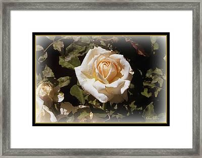 Yellow Rose Of Texas Framed Print by Trina Prenzi