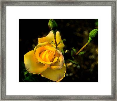 Yellow Rose 2 Framed Print