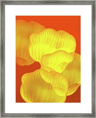 Yellow Rose Petals Falling In The Garden Framed Print by Amy Vangsgard