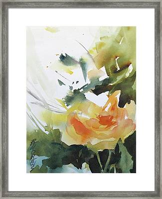 Yellow Rose Framed Print by Rae Andrews