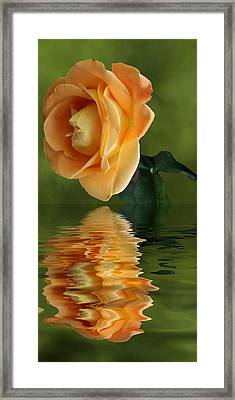 Framed Print featuring the photograph Yellow Rose by Rick Friedle
