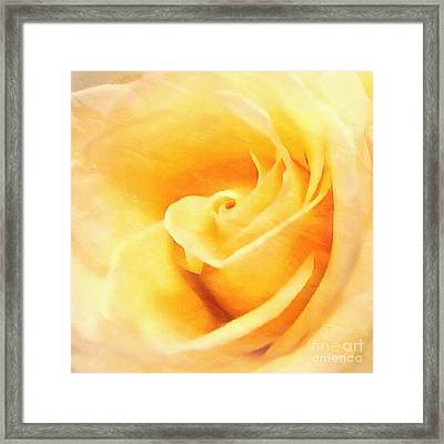 Framed Print featuring the photograph Yellow Rose - Sweet Whispers by Janine Riley