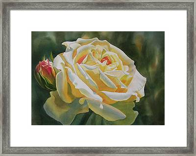 Yellow Rose With Bud Framed Print by Sharon Freeman