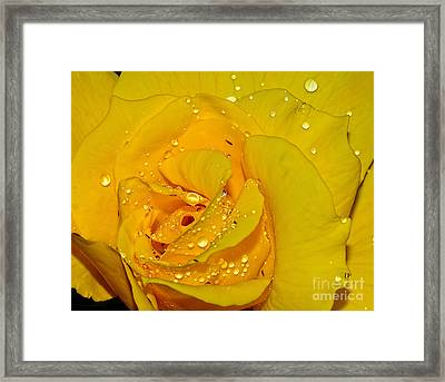 Yellow Rose With Droplets By Kaye Menner Framed Print