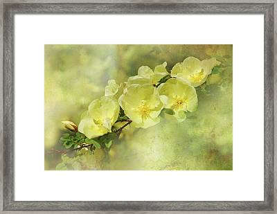 Framed Print featuring the photograph Yellow Roses by Elaine Manley