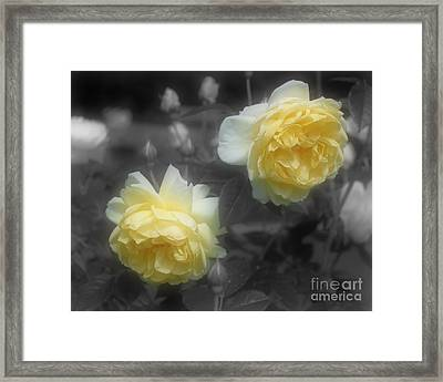 Framed Print featuring the photograph Yellow Roses Partial Color by Smilin Eyes Treasures