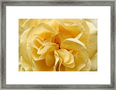 Yellow Ruffles - Rose Framed Print