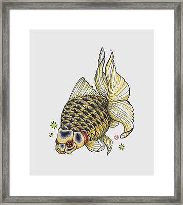 Yellow Ryukin Framed Print by Shih Chang Yang