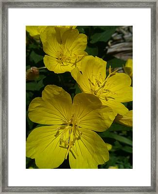 Yellow  Shade Framed Print by Trish Hale