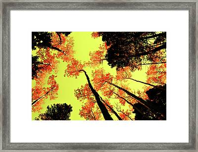 Framed Print featuring the photograph Yellow Sky, Burning Leaves by Kevin Munro