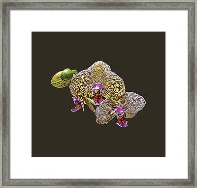 Yellow Spotted Orchid Framed Print by Susan Savad