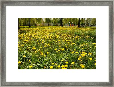 Yellow Spring Carpet Framed Print by Henryk Gorecki