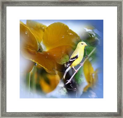 Yellow Spring Framed Print by Cathy  Beharriell