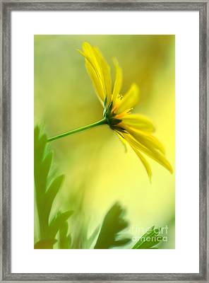 Yellow Spring Daisy Abstract By Kaye Menner Framed Print by Kaye Menner
