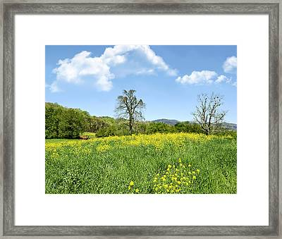 Yellow Spring Framed Print by Susan Leggett