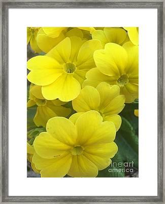 Yellow Spring Framed Print by Viktoriya Sirris