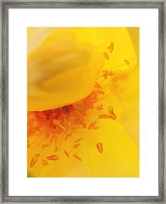 Yellow Stamen Framed Print