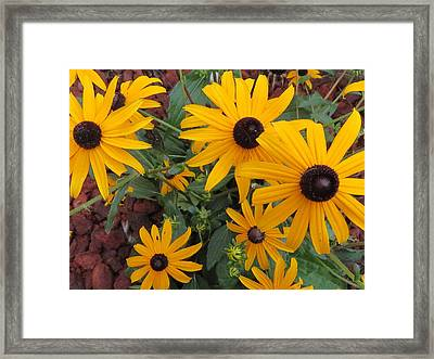 Yellow Stant Out Framed Print
