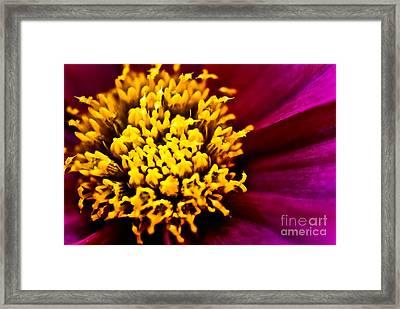 Yellow Stars Burst Framed Print by Ryan Kelly