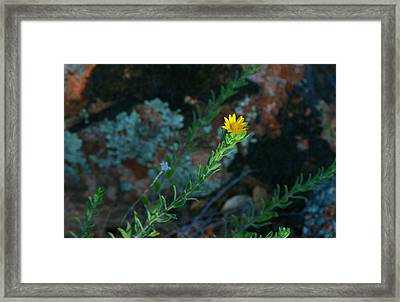 Yellow Stretching Framed Print