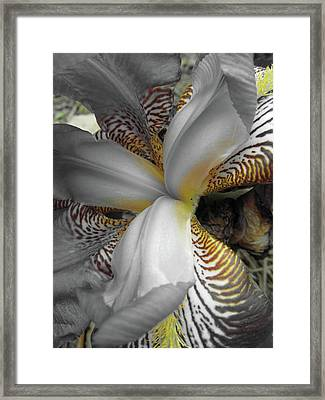 Yellow Stripes Framed Print by Michele Caporaso