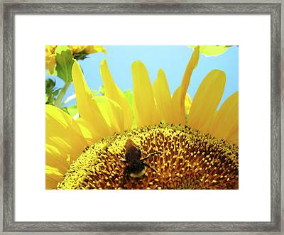Yellow Sunflower Art Prints Bumble Bee Baslee Troutman Framed Print by Baslee Troutman