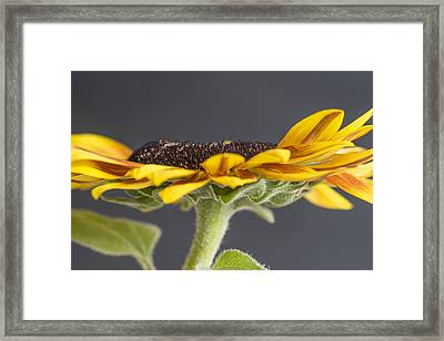 Yellow Sunflower Fine Art Wall Decor Framed Print