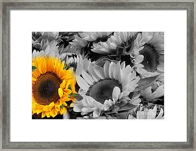 Yellow Sunflower On Black And White Framed Print by Dora Sofia Caputo Photographic Art and Design