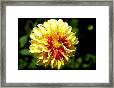 Yellow Sunshine Framed Print