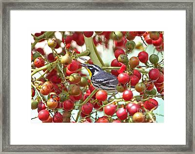 Yellow-throated Warbler Framed Print
