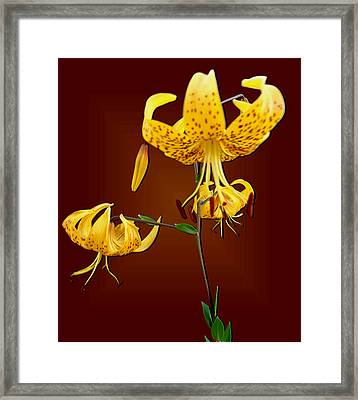 Yellow Tiger Lilies Framed Print by Tara Hutton