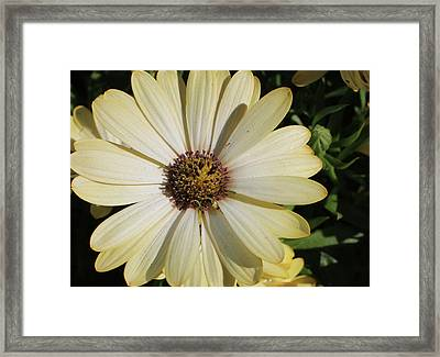 Yellow Tipped Framed Print by Michele Caporaso