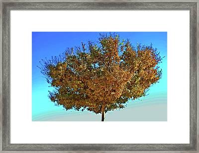 Yellow Tree Blue Sky Framed Print