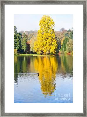 Yellow Tree Reflection Framed Print