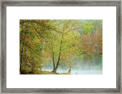 Framed Print featuring the photograph Yellow Trees by Iris Greenwell