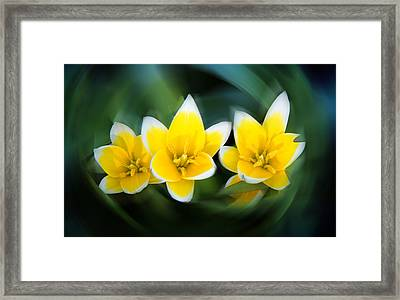 Yellow Trio Framed Print