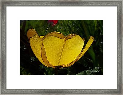 Yellow Tulip 2 Framed Print by Jean Bernard Roussilhe