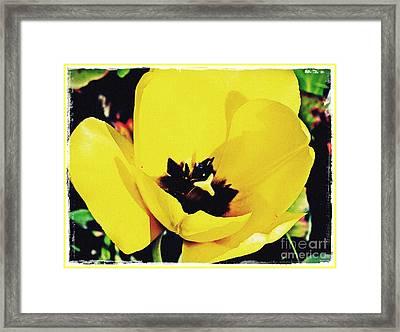 Yellow Tulip 2 Framed Print by Sarah Loft