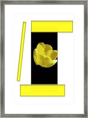Yellow Tulip 3 Of 3 Framed Print
